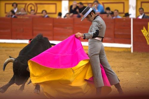 Torero Bullfight in las Ventas