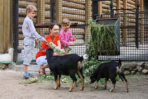 Children feeding goats