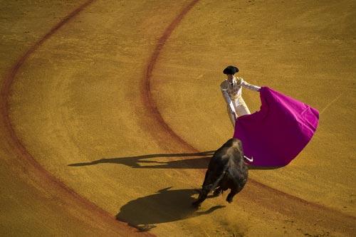 A matador in the ring